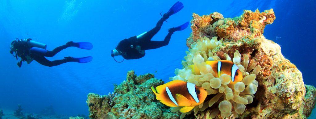 Podmorsky svet Koh Tao