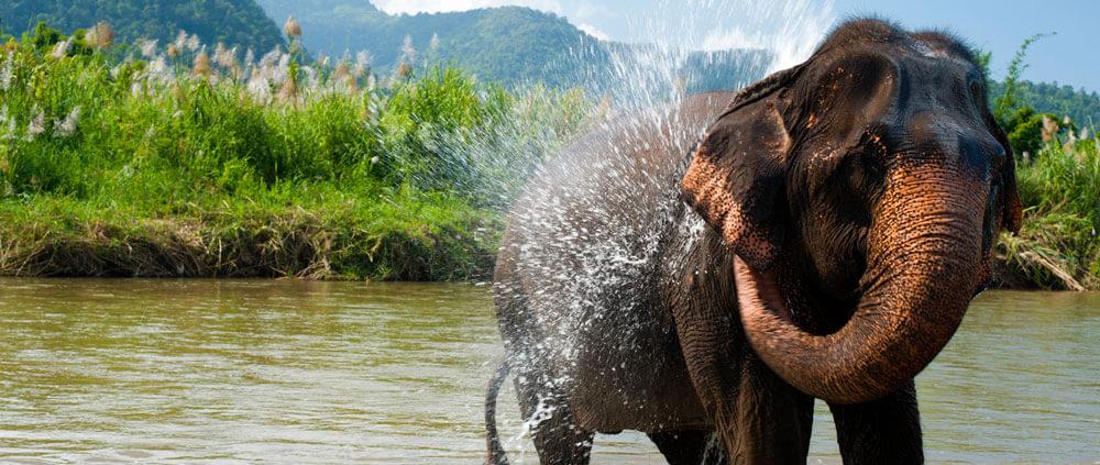 Slony thajsko